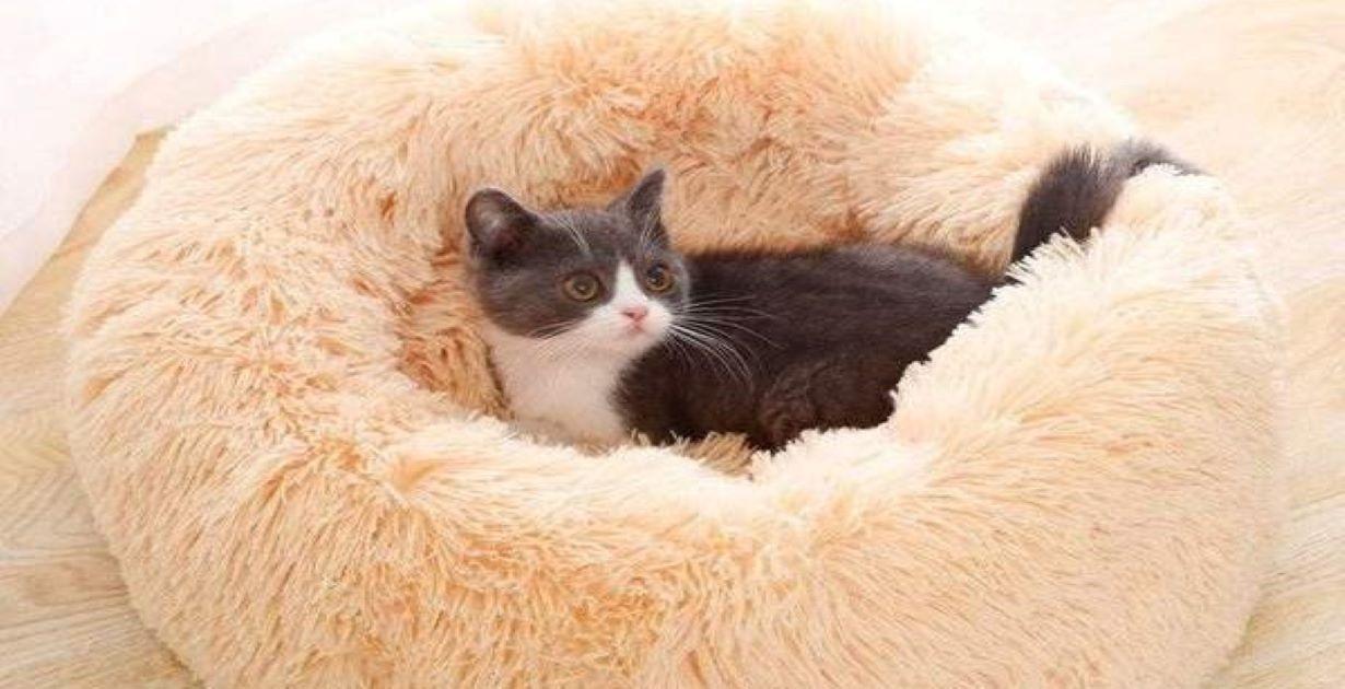 The KittyCat's Den